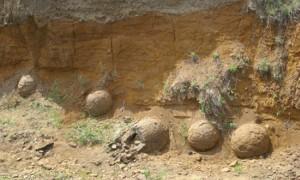яйця динозавра пустеля Гобі