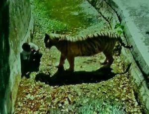 тигр і хлопчик зоопарк Нью-Делі