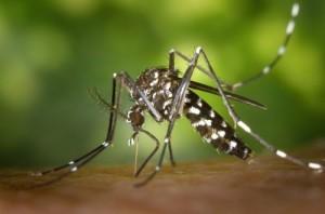 лихоманка денге