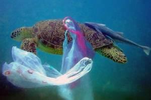 сміття в океані