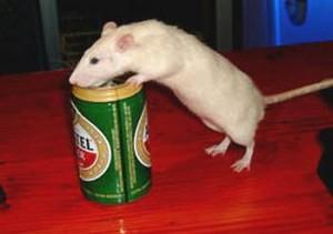 щурі пиво