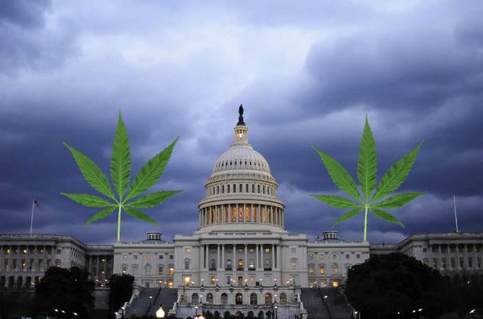 марихуана вашингтон