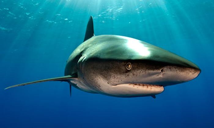 акула єгипет