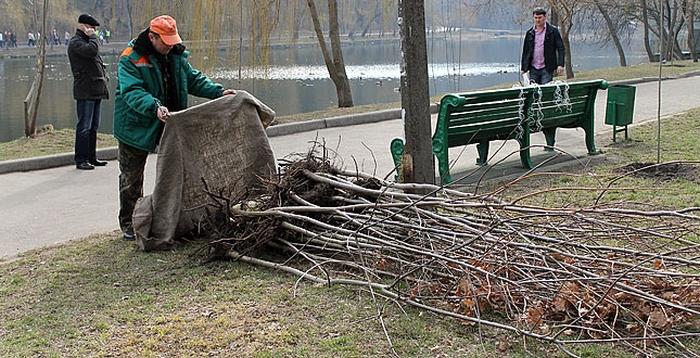 висадження дерев київ