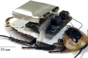 тарган мікрокомпютер