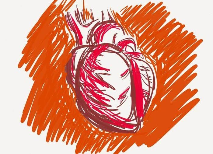серце людини