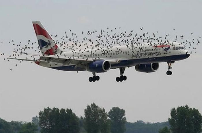 птахи літак