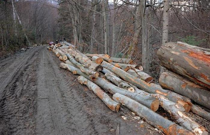 вирубка лісу санітарна