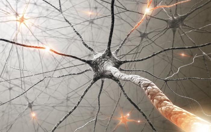 нейрони мозку