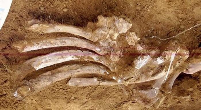 кістки динозавра