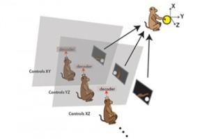 мозок мавпи компютер