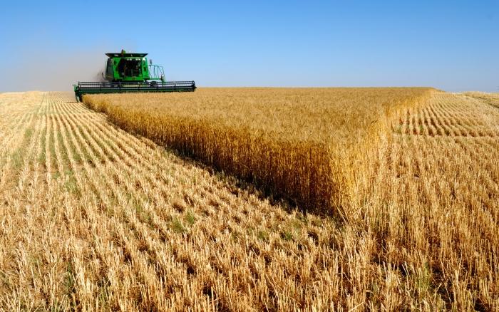 намолочено зерно