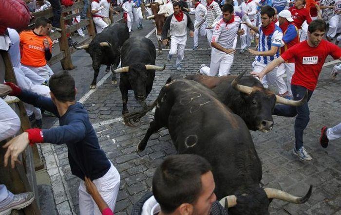 забіг биків іспанія