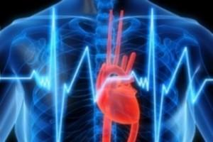 серцебиття людини