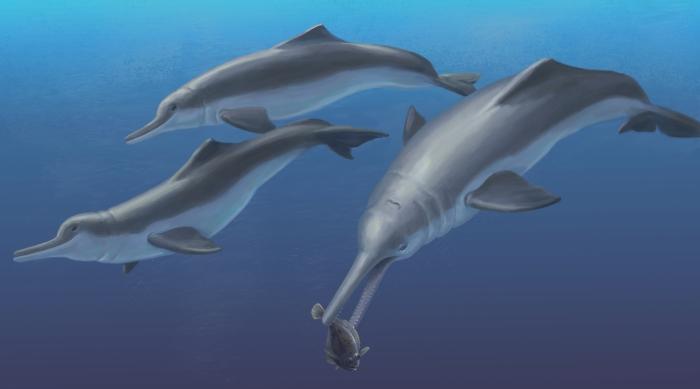 річковий дельфін Isthminia panamensis