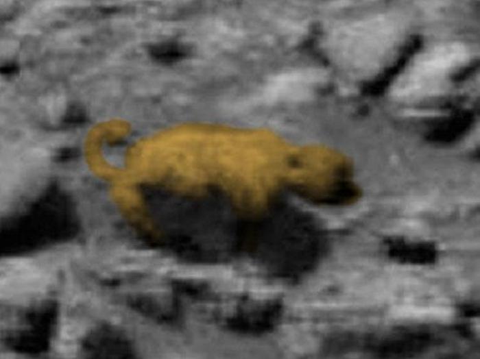 тварина схожа на ведмедя марс