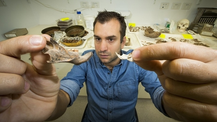 останки щурів великих розмірів