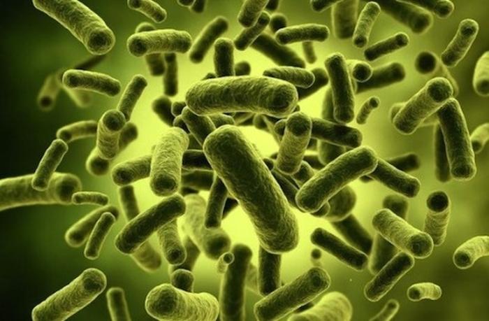 кишкові бактерії