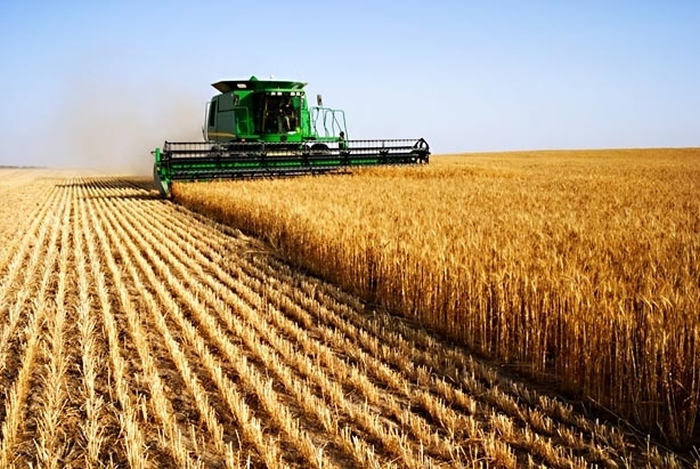 збір урожаю зернових