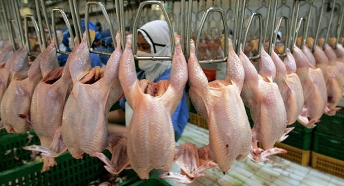 м'ясо птиці