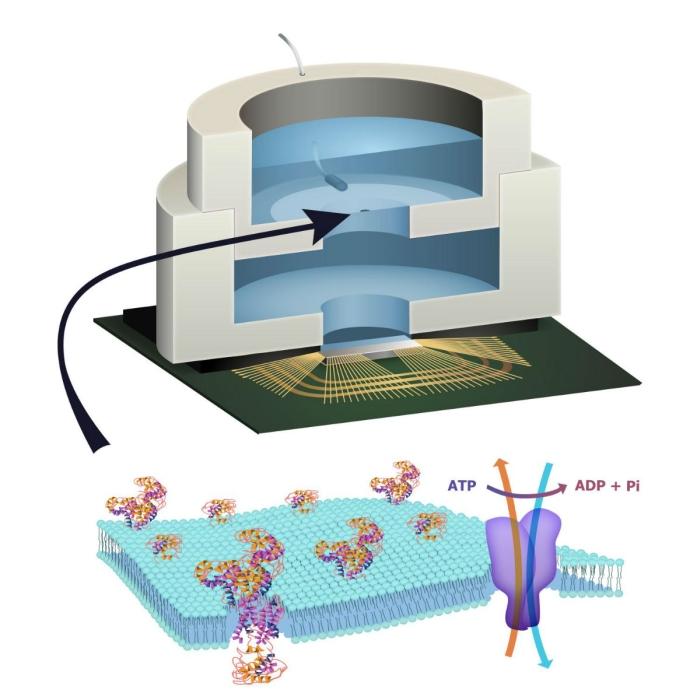 кремнієвий мікрочіп живиться атф