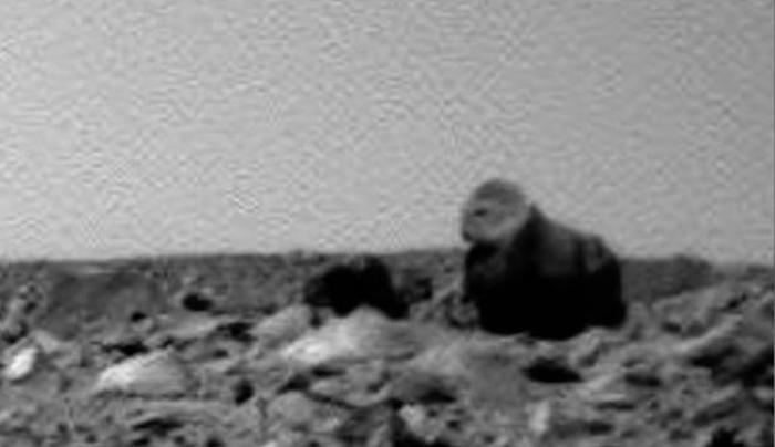 горила та верблюд на марсы