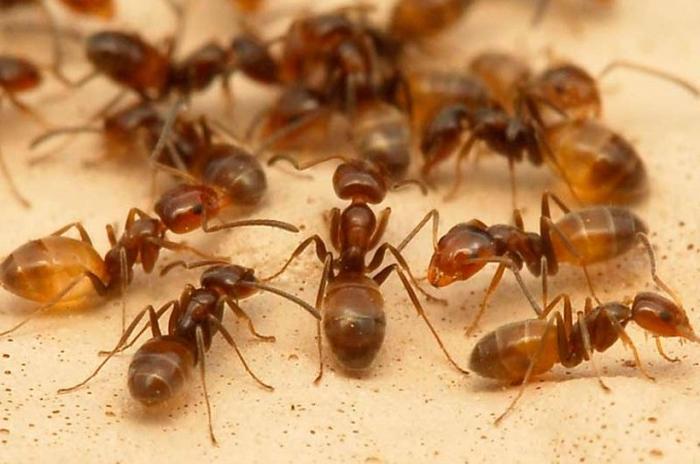 комахи в домі