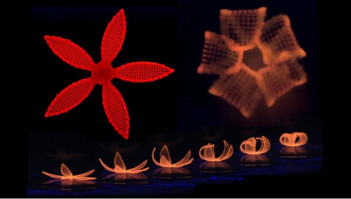 4-D квітка