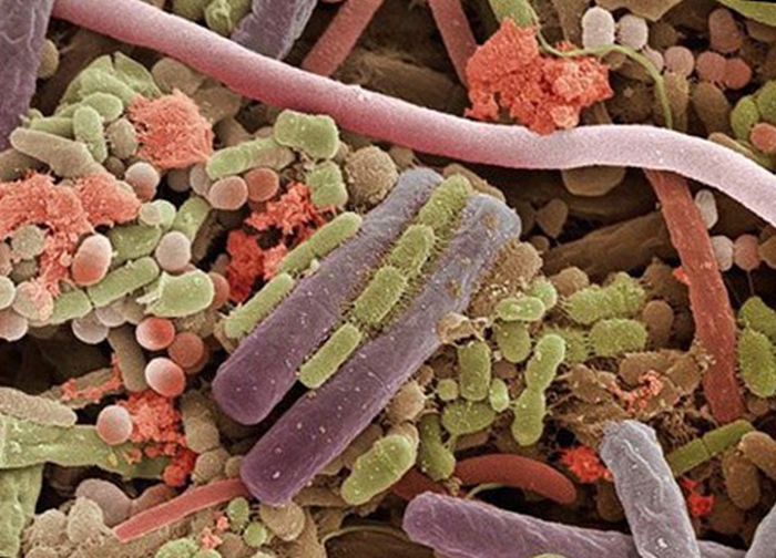мікроби та бактерії