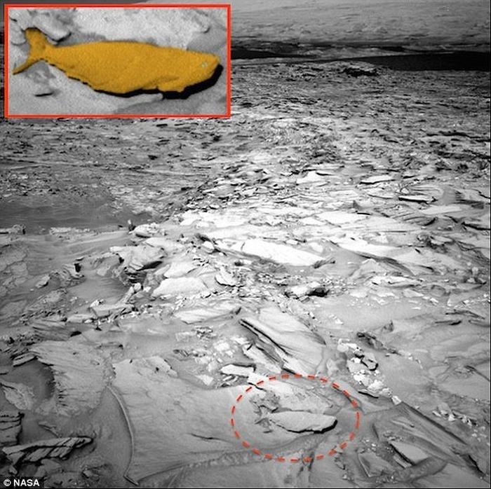 скам'яніла риба марс