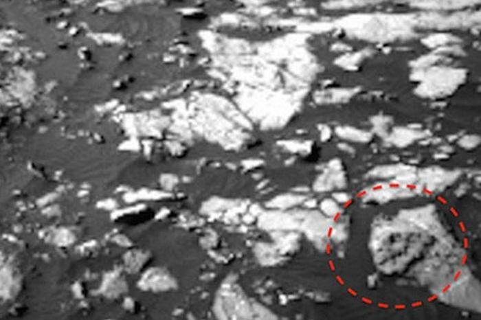 череп тиранозавра на марсі
