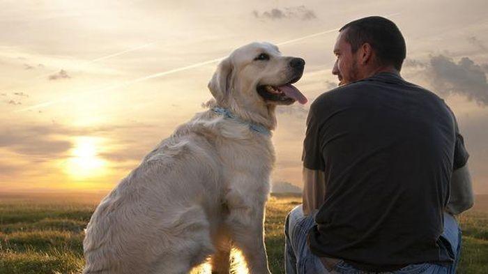 собака з хазяїном