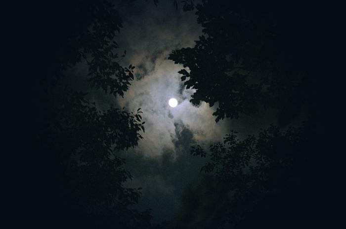 ліс ніч