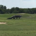 алагітор поля для гольфу флорида