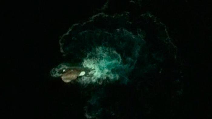 невілома істота поблизу антарктиди