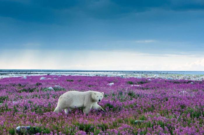 арктика літо