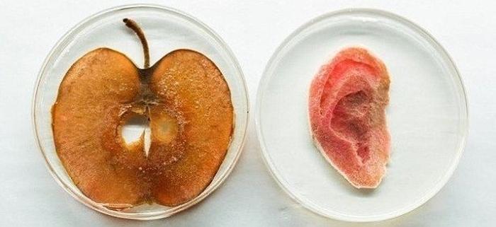 вухо з яблука