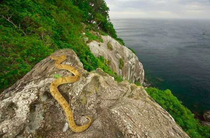 острів зі зміями