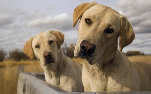 собаки розуміють слова
