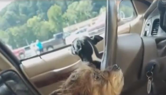 собаки викрали автомобіль у пенсіонерки