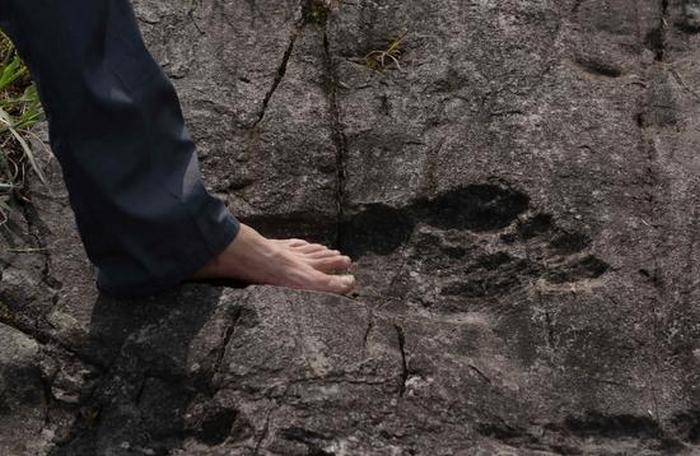 гігантські сліди ніг