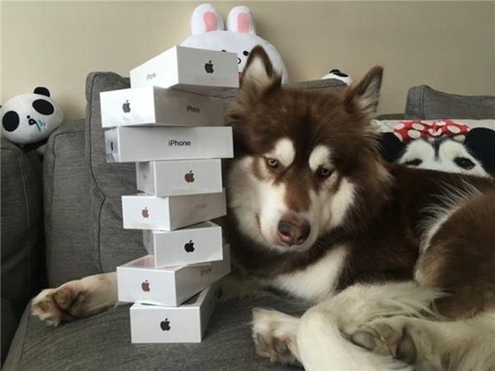 подарував своїй собаці вісім iPhone 7