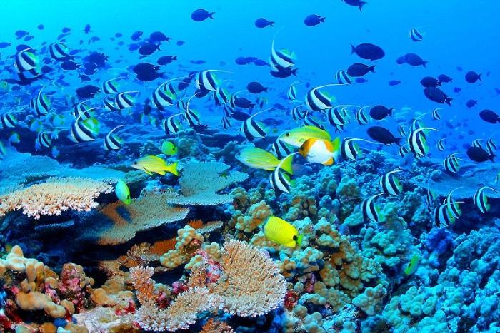 коралові риби