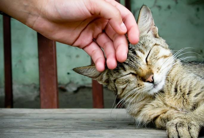 гладити кішку