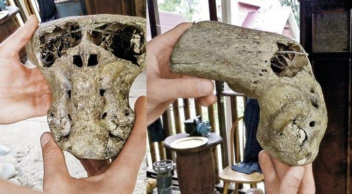 череп невідомої тварини