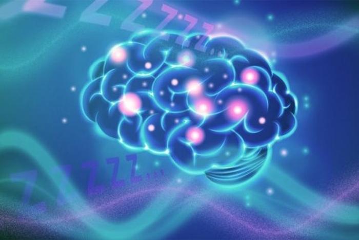 мозок сон