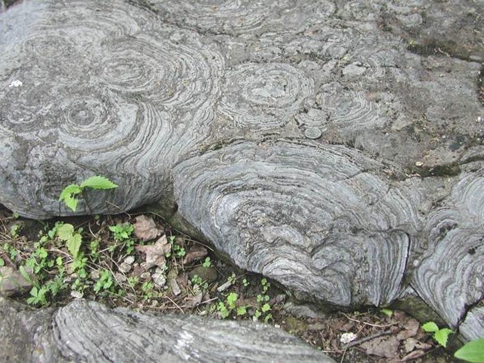 Строматоліт