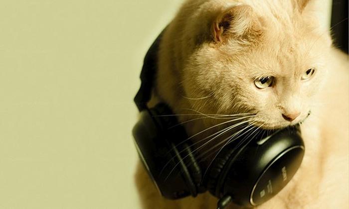 музика для котів