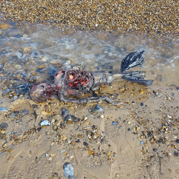 фото останків русалки