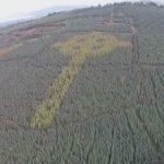 хрест кельтів з дерев ірландія